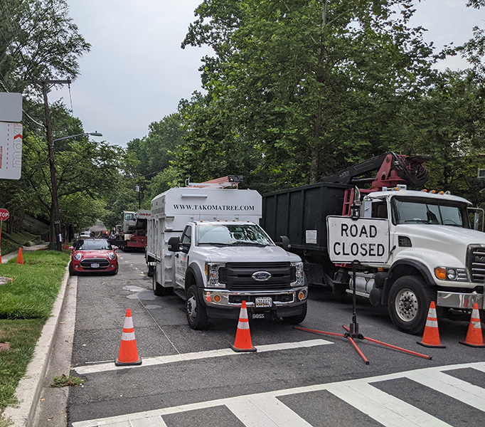 MD Tree Removal Services
